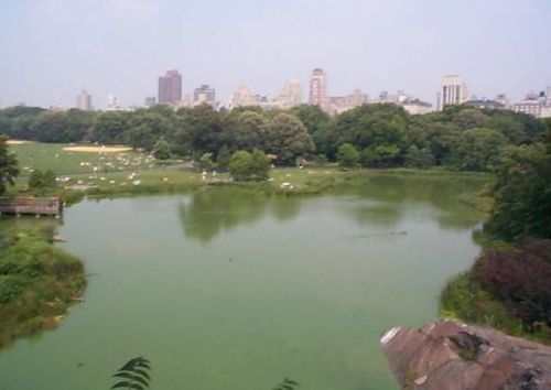 Photo: Central Park, Turtle Pond