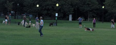Photo: Dogs and People in Boston Common