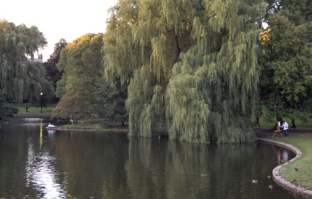 Photo: Willows at Public Gardens