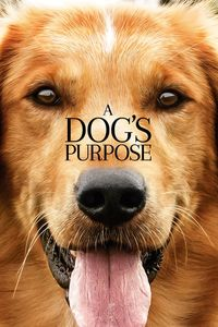 "<strong class=""MovieTitle"">A Dog's Purpose</strong> (2017)"