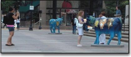 Photo: Touristes photographiant des vaches