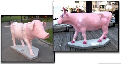 Photo: Vaches ou cochons?